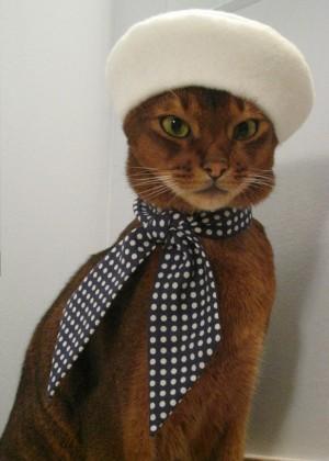 Cat fashion bloggers and cat fashion designers.
