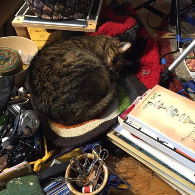 Cat Helper