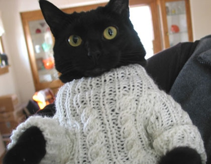 cat wearing a sweater, oh my!