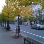 FALL COLORS: An Interlude in Pictures... 7