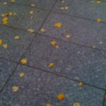 FALL COLORS: An Interlude in Pictures... 1
