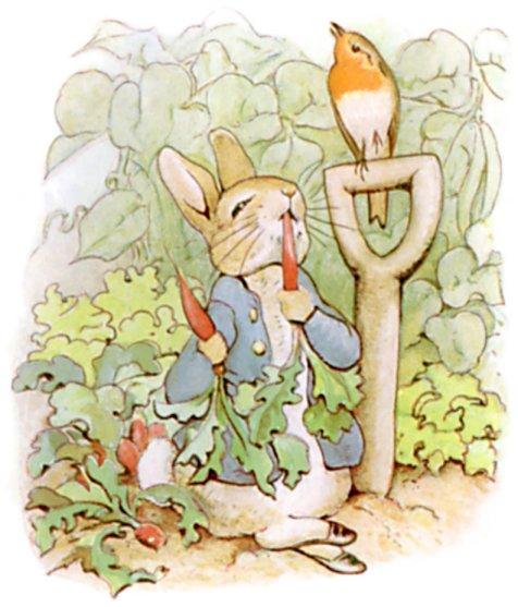 Holiday Patterns Peter Rabbit Ebook Sheep To Shawl Llc