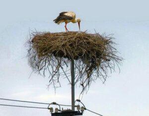Stork Nest in Lithuania