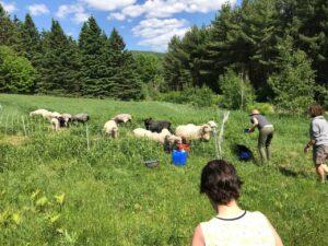 Northeast Kingdom Vermont Knitting Retreats 7